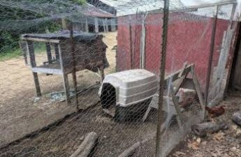 chicken run base featured