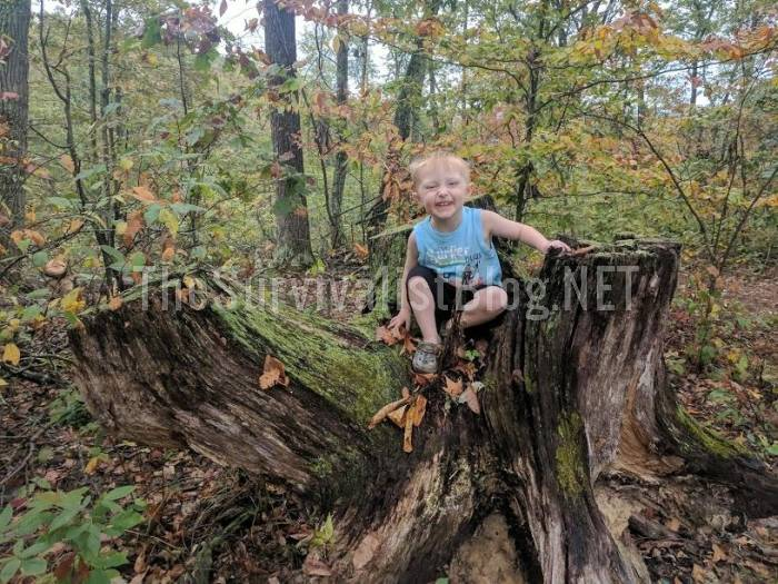 child sitting on tree stump