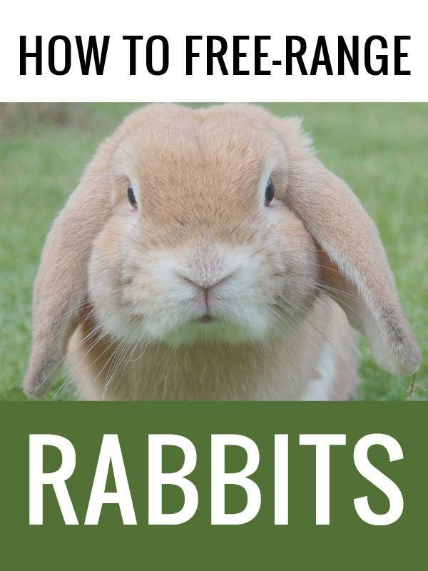 free ranging rabbits pinterest