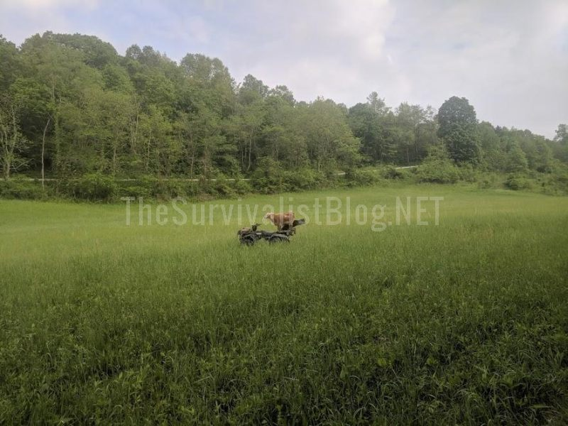 goat climbed on ATV in the middle of the field