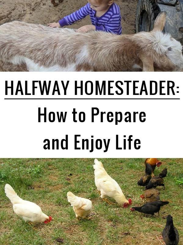 halfway homesteader pinterest