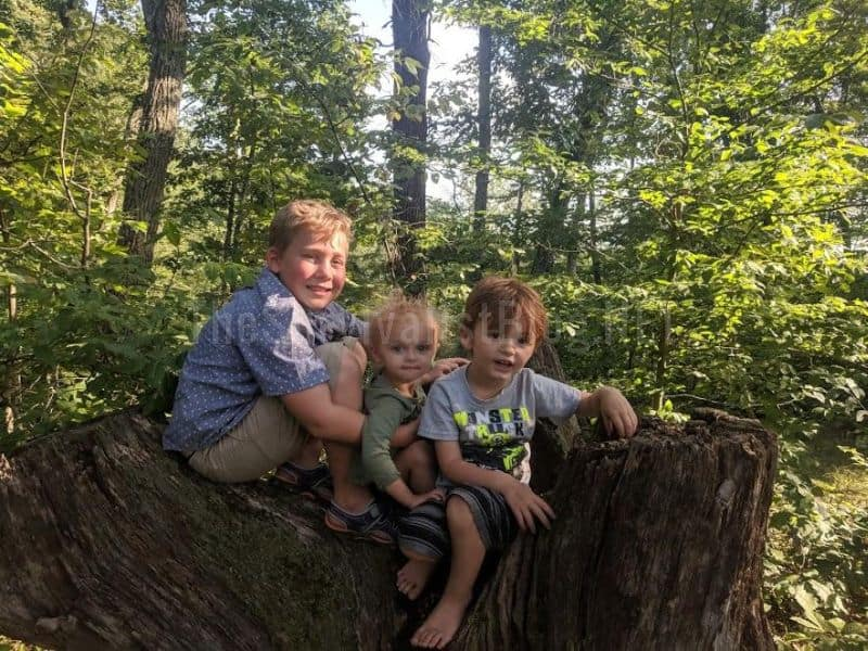 children on a tree stump