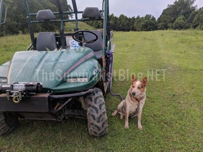 dog next to atv