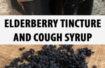 elderberry tincture cough syrup pinterest