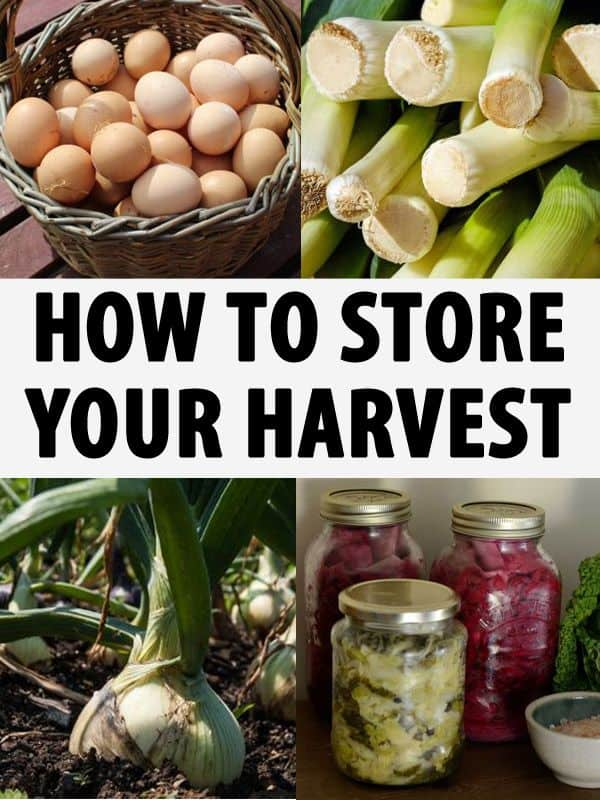 how to store your harvest