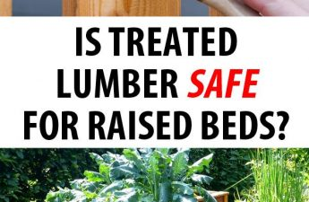 treated lumber safety featured