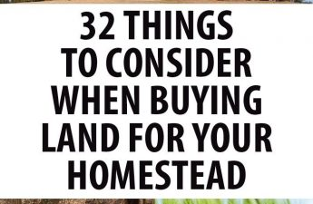 buying land homestead pinterest