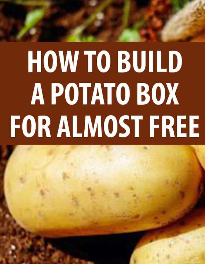 potato box pinterest