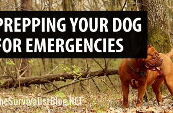dog preparedness featured