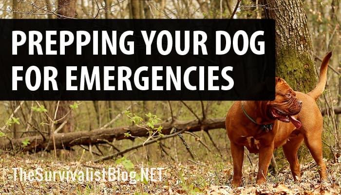 dog preparedness featured