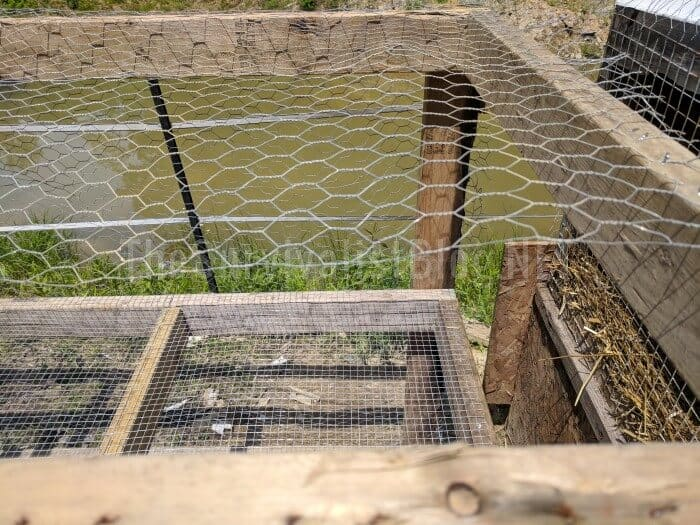 chicken wire on top of the coop