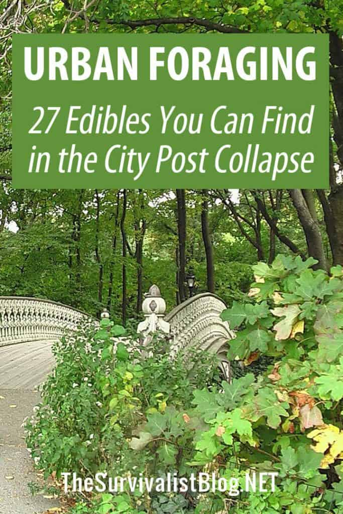 urban foraging for wild edibles pinterest