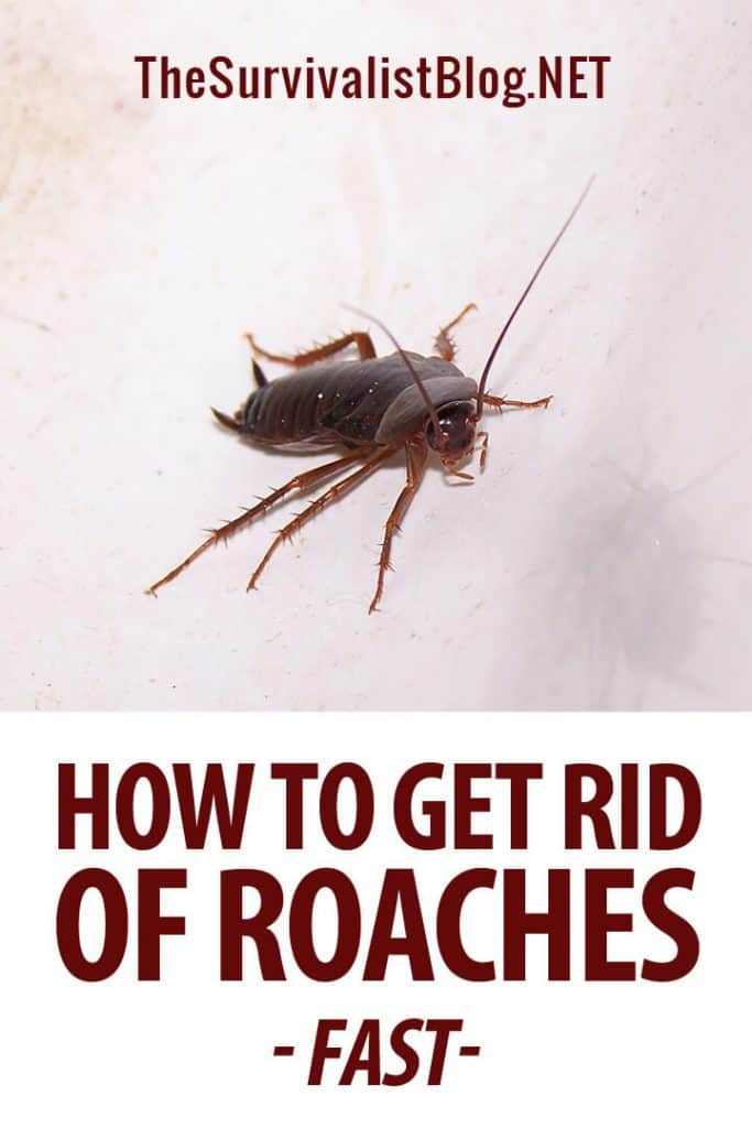 getting rid of roaches pinterest