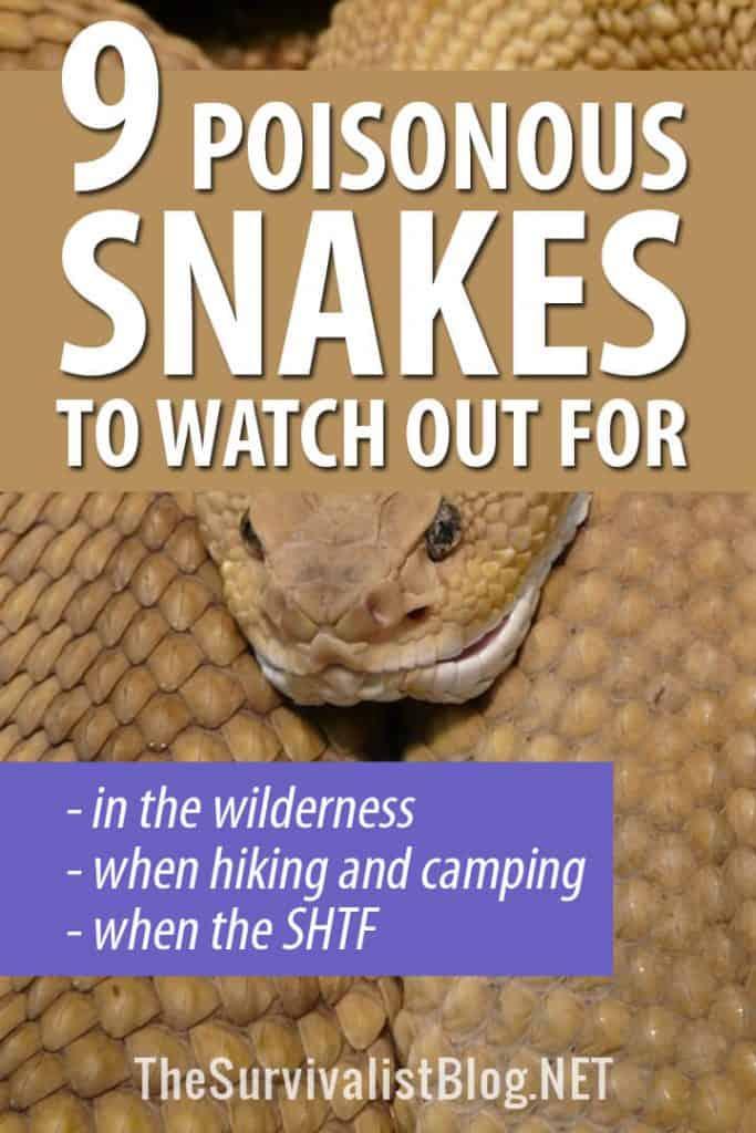 poisonous snakes pinterest