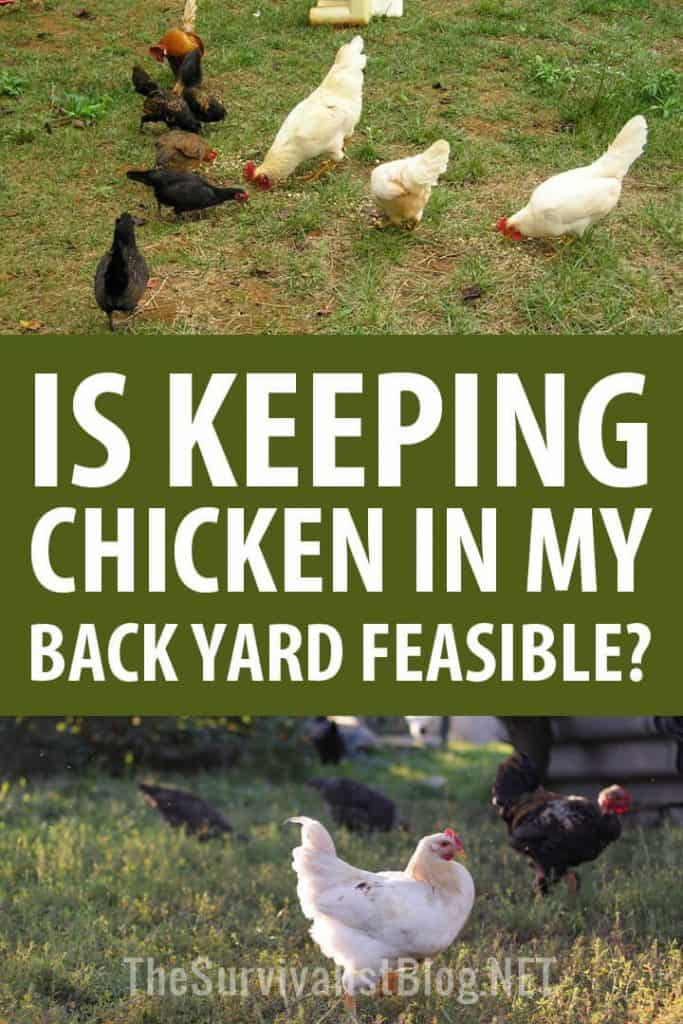 keeping chickens feasible Pinterest image