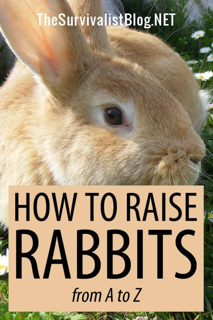raising rabbits pinterest image