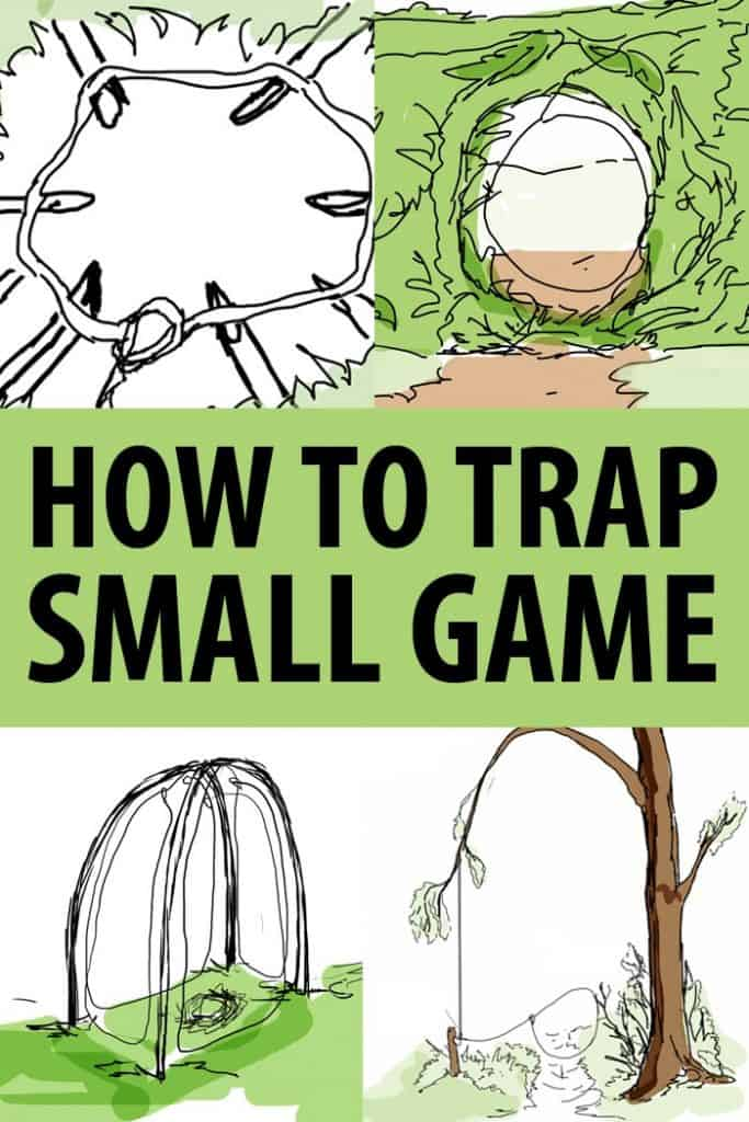small game snares traps pinterest