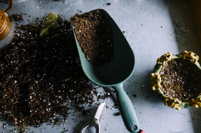 gardening soil and trowel