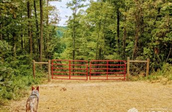 new red gates on the homestead