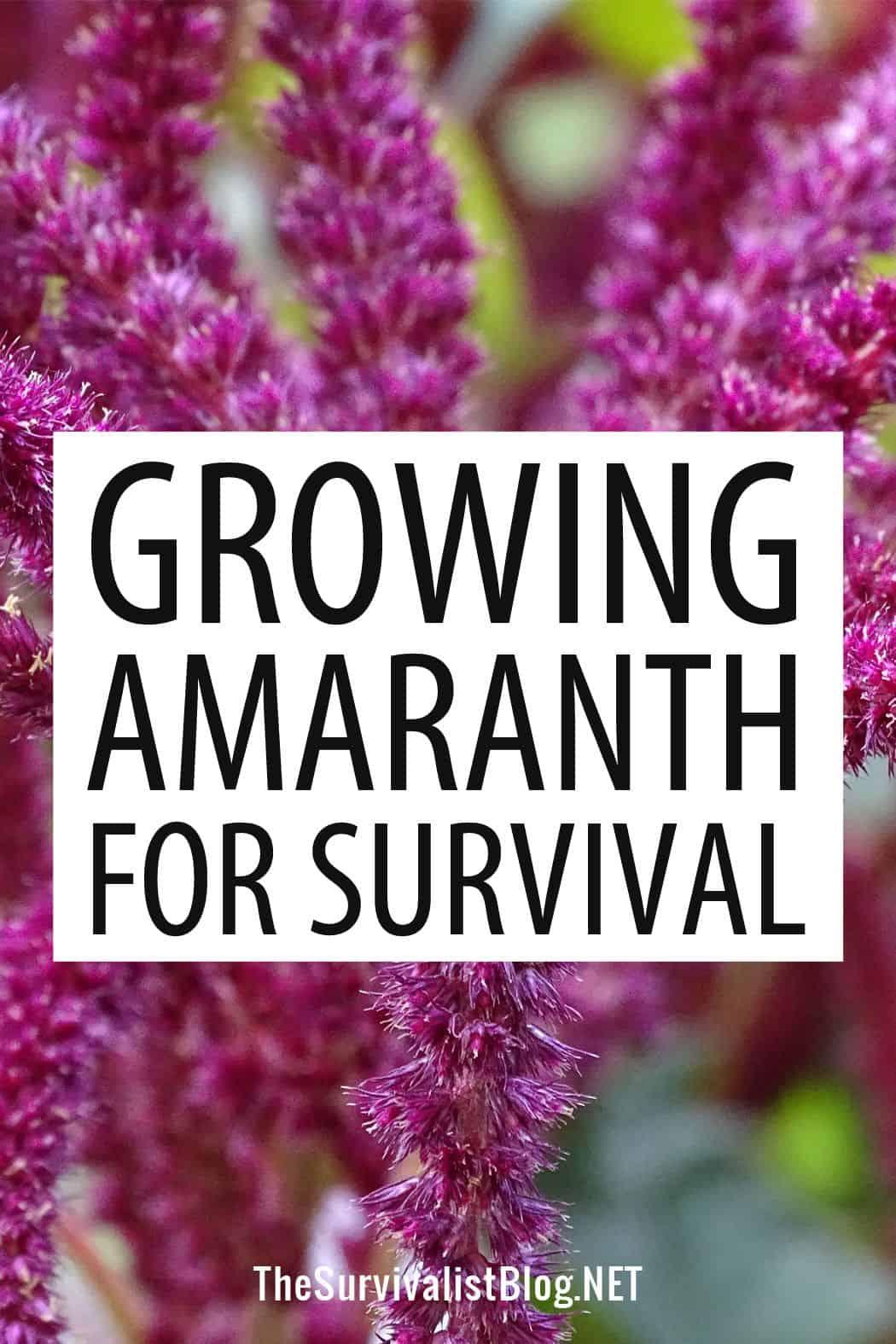 amaranth Pinterest image