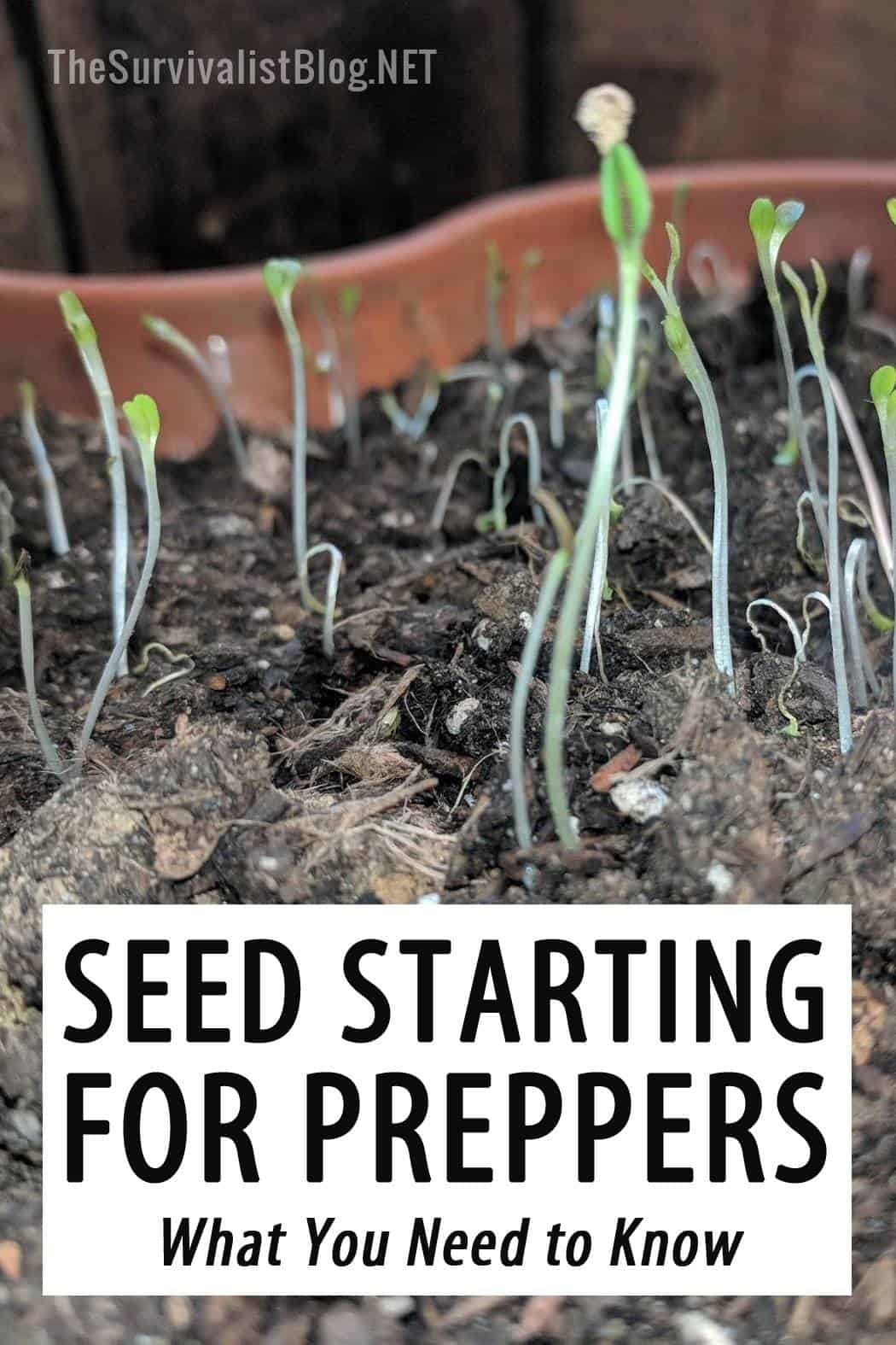 seed starting for preppers pinterest